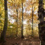 Kleinod Schönbuch – Erholung und frühzeitliche Geschichte