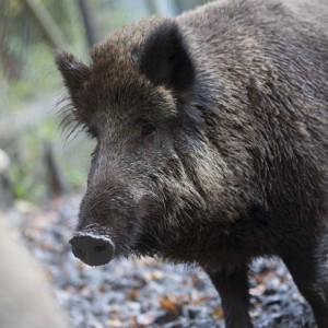schoenbuch- natur pur - hirsche damwild wildschweine